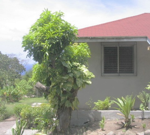 Cassava Cottage