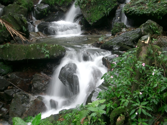 El _Yunque _Rainforest