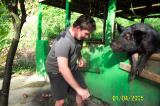 St. Croix-beer-drinking-pig